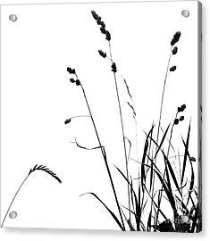 Organic Enhancements 10 Acrylic Print
