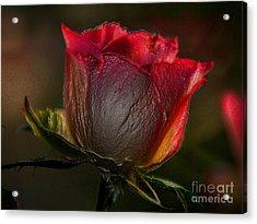Organic Rose Acrylic Print