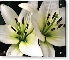 Oriental Lily Named Endless Love Acrylic Print by J McCombie