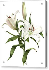 Oriental Lily Siberia Acrylic Print
