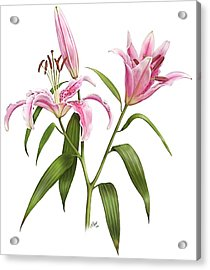 Oriental Lily Stargazer Acrylic Print