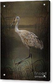 Oriental Sandhill Crane Acrylic Print