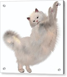 Oriental White Cat Acrylic Print by Corey Ford