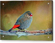 Original Colors  Acrylic Print