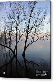 Original Dancing Tree Acrylic Print by Paula Guttilla