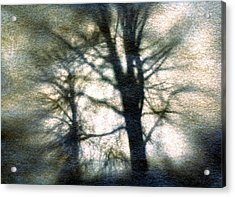 Original Tree Acrylic Print by Diana Ludwig