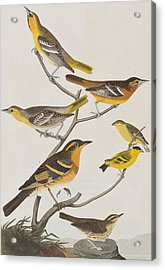 Orioles Thrushes And Goldfinches Acrylic Print by John James Audubon