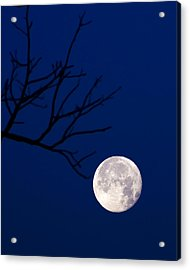 Acrylic Print featuring the photograph Ornament by Alan Raasch