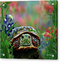 Ornate Box Turtle Acrylic Print