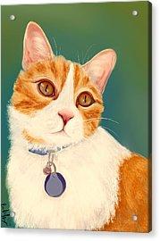 Oscar- Orange Tabby  Acrylic Print