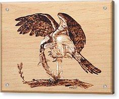 Osprey 3 Acrylic Print by Ron Haist