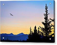 Osprey Against The Sunset Acrylic Print