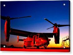Osprey At Sunset Acrylic Print