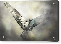 Osprey Acrylic Print by Daniel Eskridge
