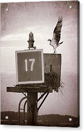 Osprey Landing On Channel Marker 17 Acrylic Print by Dan Beauvais