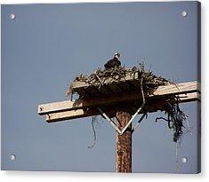 Osprey Nest Acrylic Print by Laurie Kidd