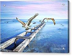 Osprey On The Move Acrylic Print