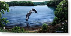 Osprey Over Clear Lake Acrylic Print by Mark Mittlesteadt