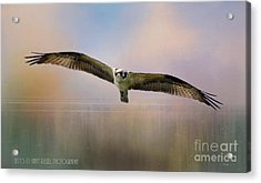 Osprey Over The Shenandoah Acrylic Print