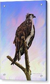 Osprey Perch Acrylic Print by Deborah Benoit