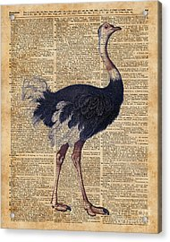 Ostrich Big Bird Animal Vintage Dictionary Illustration Acrylic Print by Jacob Kuch