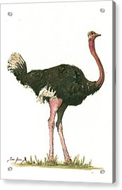 Ostrich Bird Acrylic Print by Juan Bosco
