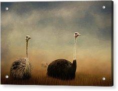 Ostrich Couple Acrylic Print