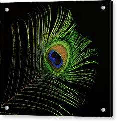 Ostrich Feather Tip Eye Acrylic Print