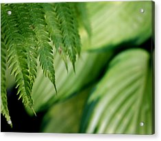 Acrylic Print featuring the photograph Ostrich Fern And Hosta by Diane Merkle