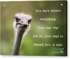 Ostrich Having A Bad Hair Day Acrylic Print
