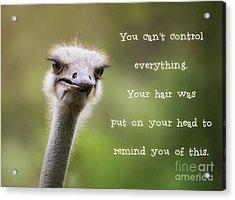 Ostrich Having A Bad Hair Day Acrylic Print