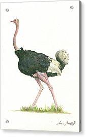Ostrich Acrylic Print by Juan Bosco