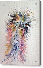Ostrich Acrylic Print by Kovacs Anna Brigitta