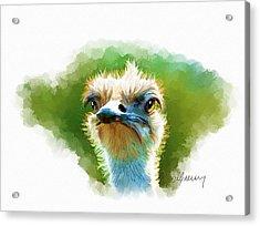 Ostrich Portrait Acrylic Print by Michael Greenaway