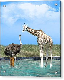 Ostrich With Galoshes Acrylic Print by Gravityx9  Designs