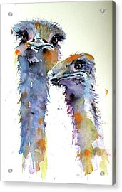 Acrylic Print featuring the painting Ostriches by Kovacs Anna Brigitta