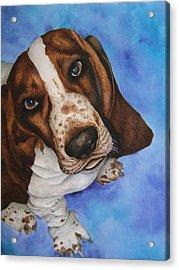 Otis The Basset Hound Acrylic Print by JoLyn Holladay