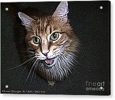 Otis The Orange Kitty Acrylic Print
