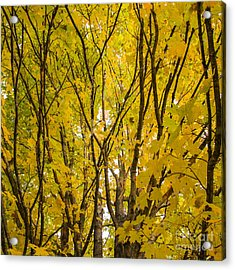 Otter Creek State Park Acrylic Print