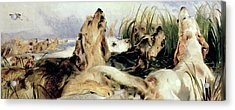 Otter Hounds Acrylic Print by Sir Edwin Landseer