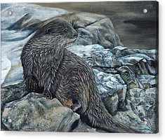 Otter On Rocks Acrylic Print