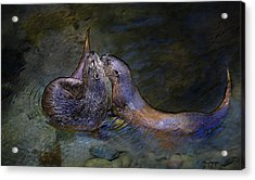 Otters  Acrylic Print