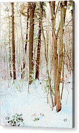 Our Backyard After The Snow Acrylic Print
