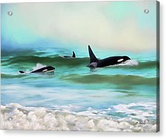 Our Family - Orca Whale Art Acrylic Print