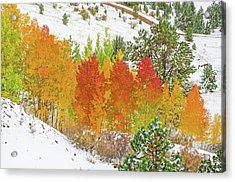 Our Winter Begins Around Mid October.  Acrylic Print by Bijan Pirnia