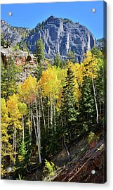 Acrylic Print featuring the photograph Ouray Aspens by Ray Mathis