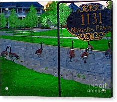 Out For A Stroll Acrylic Print by Deborah MacQuarrie-Selib