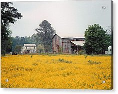 Out In The Country Acrylic Print by Robert Boyette