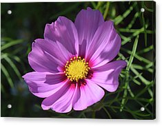 Acrylic Print featuring the photograph Out In The Sun. by Terence Davis