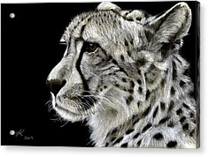 Out Of Africa Acrylic Print by Kyla Heumann
